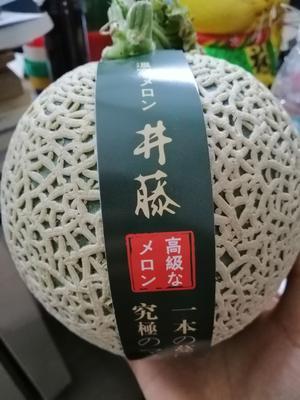 海南省三亚市崖州区网纹瓜  2斤以上 日本井藤瓜 网纹玫珑