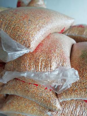 贵州省毕节市威宁彝族回族苗族自治县玉米干粮 杂质很少 水份14%-16%