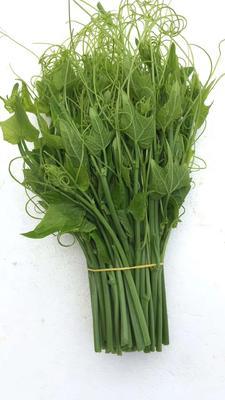 这是一张关于佛手瓜藤尖 人工种植 60cm 的产品图片
