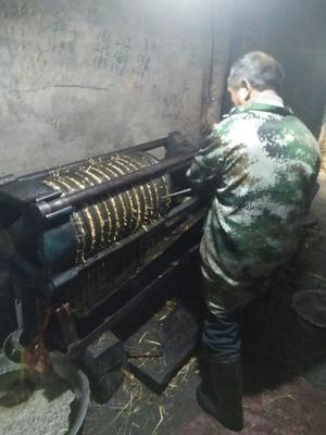 湖南省怀化市会同县野生山茶油