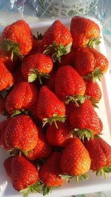 吉林省吉林市磐石市红颜草莓 30克以上