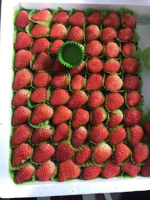 安徽省合肥市长丰县奶油草莓 20克以上