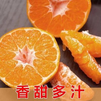 四川省成都市蒲江县耙耙柑  5斤大果包邮春节照发