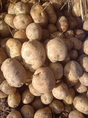 吉林省四平市公主岭市延薯4号土豆 3两以上