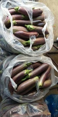 云南省西双版纳傣族自治州景洪市竹丝长茄 30~40cm 长茄
