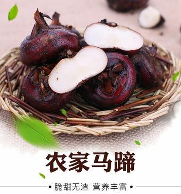 广东省潮州市湘桥区珍珠马蹄 大号