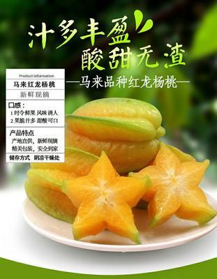 广东省潮州市湘桥区甜杨桃 2 - 3两