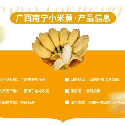 广东省潮州市湘桥区小米蕉 七成熟