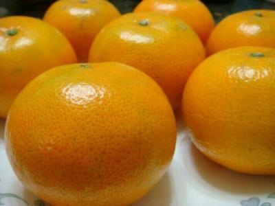 广西壮族自治区崇左市江州区茂谷柑 6.5 - 7cm 3两以上