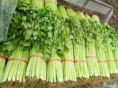 山东省临沂市沂南县西芹 40~45cm 大棚种植 0.5斤以下