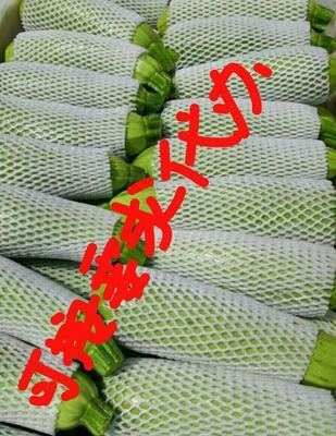 山西省长治市长子县绿皮西葫芦 0.5斤~1斤