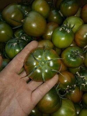 辽宁省丹东市东港市草莓柿子 1 - 2两以上