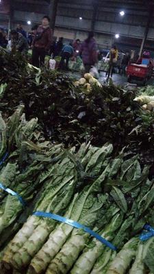 安徽省池州市贵池区红叶莴笋 1.5~2.0斤 40-50cm