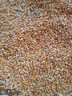贵州省毕节市威宁彝族回族苗族自治县玉米干粮 净货 水份14%-16%