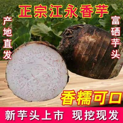 湖南省永州市江永县荔浦芋头 6cm以上