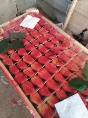 山东省青岛市平度市甜宝草莓 20克以上
