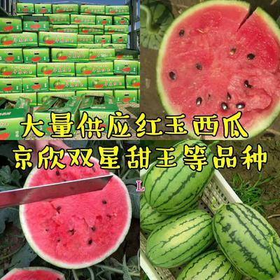 山东省潍坊市寒亭区早春红玉西瓜 3斤打底 8成熟 1茬 有籽
