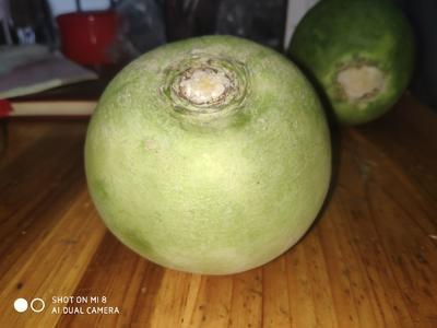 河南省郑州市中牟县心里美萝卜 1.5~2斤