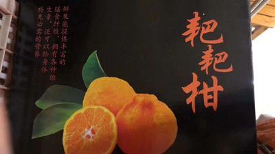 四川省眉山市东坡区耙耙柑 7.5 - 8cm 3两以上