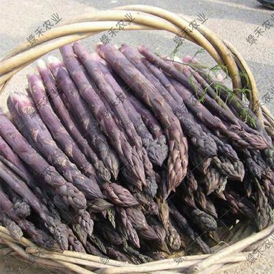 山东省济南市槐荫区芦笋种子  袋装 紫芦笋种子