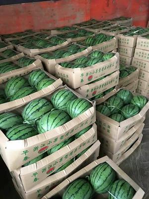 山东省潍坊市寒亭区早春红玉西瓜 3斤打底 10成熟 1茬 有籽