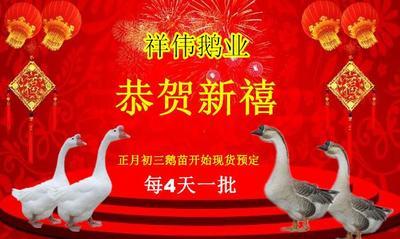 这是一张关于扬州大三花 的产品图片