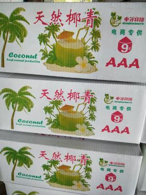 海南省海南省文昌市椰青 3 - 4斤