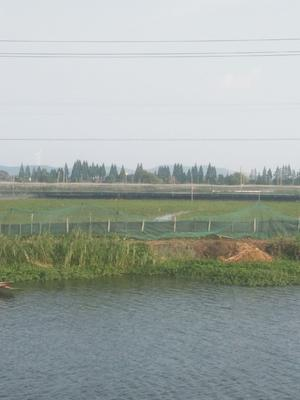 安徽省宣城市宣州区中华绒螯蟹苗