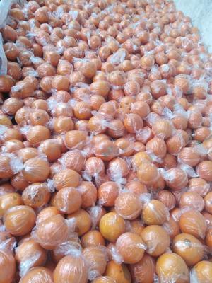 四川省成都市龙泉驿区纽荷尔脐橙  55 - 60mm 4-8两 买家负责运输