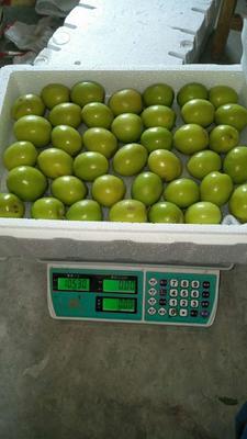 这是一张关于青枣  10斤包邮的产品图片