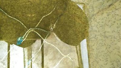 河南省开封市尉氏县台湾泥鳅 人工养殖 3cm以下 50-60尾/公斤