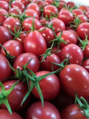 这是一张关于台湾玉女果 的产品图片