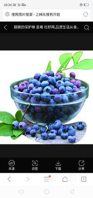 云南省临沧市耿马傣族佤族自治县蓝丰蓝莓种子