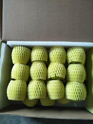 这是一张关于青枣  5斤包邮的产品图片