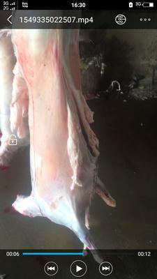 甘肃省定西市安定区羊肉类 简加工