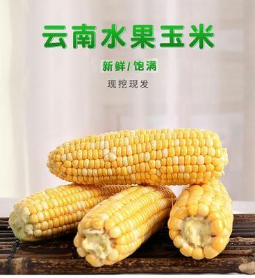 安徽省安庆市怀宁县水果玉米 带壳 甜糯