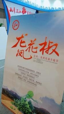 重庆合川区九叶青花椒 特级 干花椒