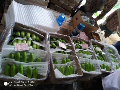 云南省西双版纳傣族自治州勐腊县老挝香蕉 七成熟