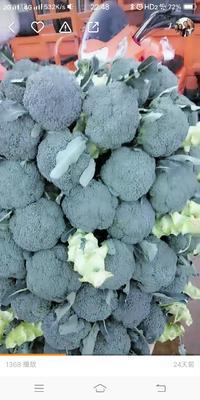 云南省红河哈尼族彝族自治州建水县耐寒优秀西兰花 2.0~2.5斤 20~25cm