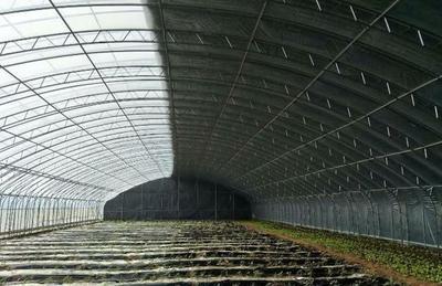 上海普陀区种植大棚 养殖大棚可定制