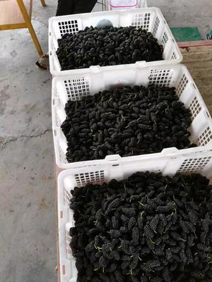 四川省凉山彝族自治州德昌县德昌桑葚 2 - 3cm