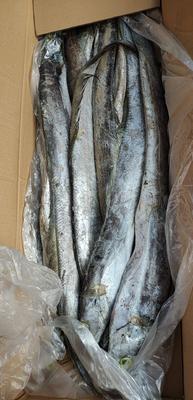 山东省泰安市肥城市西非带鱼 野生 1-1.5公斤