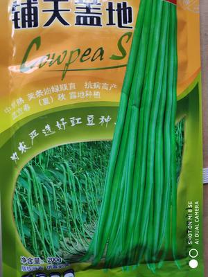 这是一张关于铺天盖地油青豆 ≥90% 的产品图片