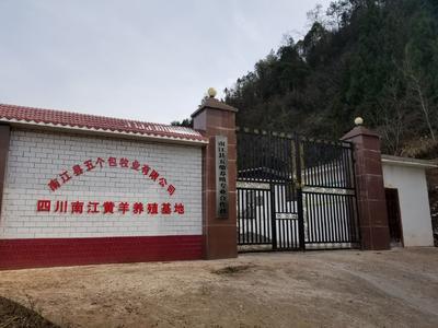 这是一张关于南江黄羊 50-80斤 的产品图片
