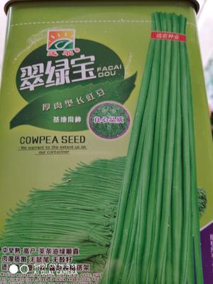 这是一张关于翠绿宝长青豆角 ≥90% 的产品图片