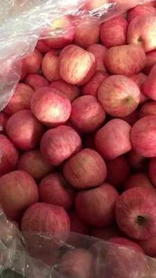 这是一张关于123苹果 75mm以上 片红 膜袋 的产品图片