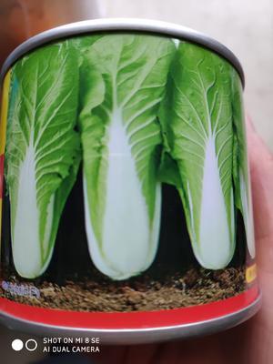 这是一张关于小白菜种子  速生超越的产品图片