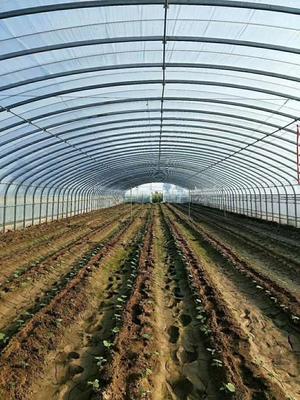 这是一张关于蔬菜大棚 的产品图片