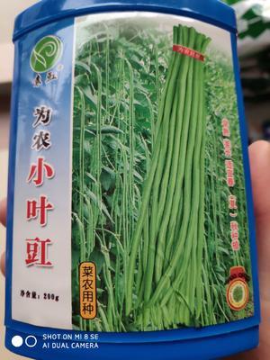 江苏省宿迁市沭阳县为农小叶豇 ≥90%