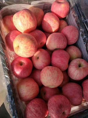 这是一张关于沂源红苹果 75mm以上 条红 纸袋 的产品图片